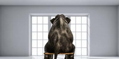 ELEPHANT IN THE ROOM: THE 'CUSTOMER JOURNEY' IS BEING MISREPRESENTED
